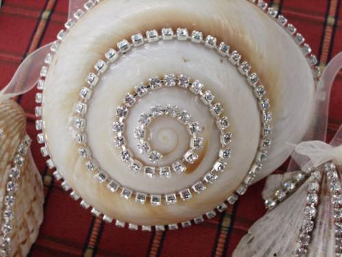 diamonte shell 1 close up