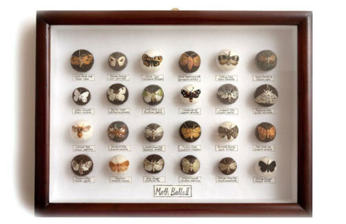 claire-moynihan-large-moth-display-box-570