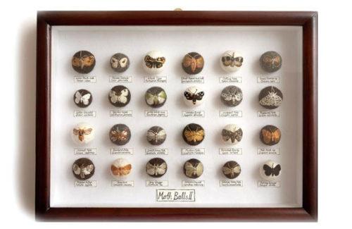 claire-moynihan-large-moth-display-box-570